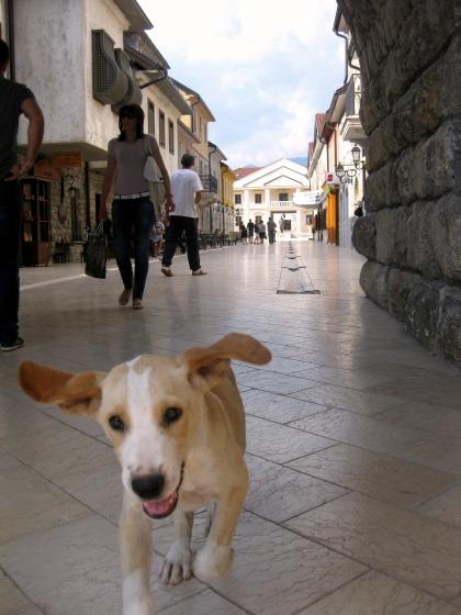 Na ulazu vas dočekuje Žuća, tipičan domaćinski pas u srpskim kućama, nestašan i dopadljiv